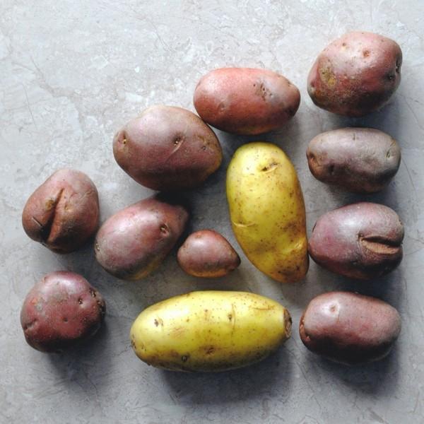 강원도 양평 감자 7KG